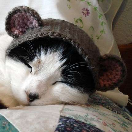 Cat Hat Crochet Pattern The Best Collection Ever