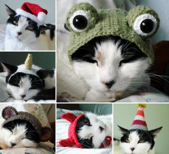 Crochet and Knitted Cat Hats