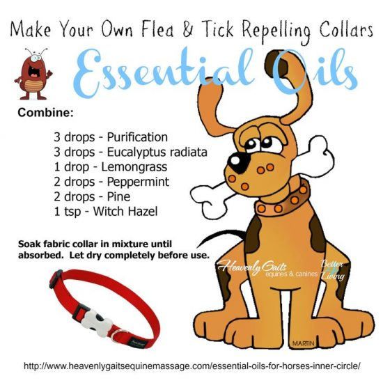 DIY Flea and Tick Repelling Collars