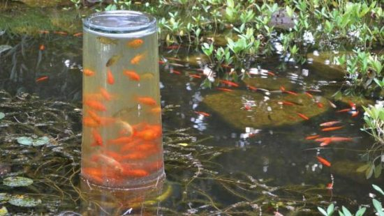 Fish observation tower an easy diy video tutorial for Koi pond insert