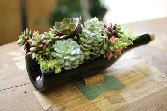 Succulent Wine Bottle Planter
