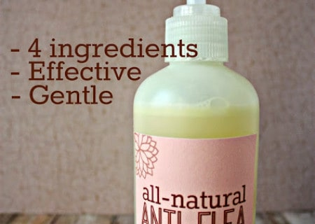 4 Ingredient Natural Anti-Flea Dog Shampoo