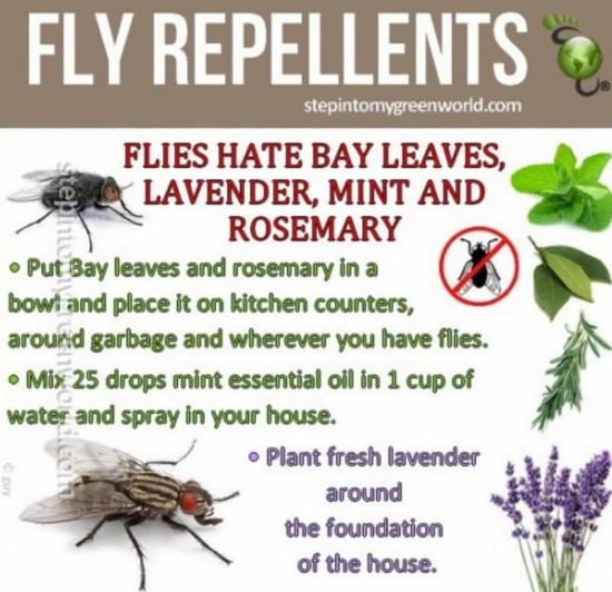 Fly Repellant