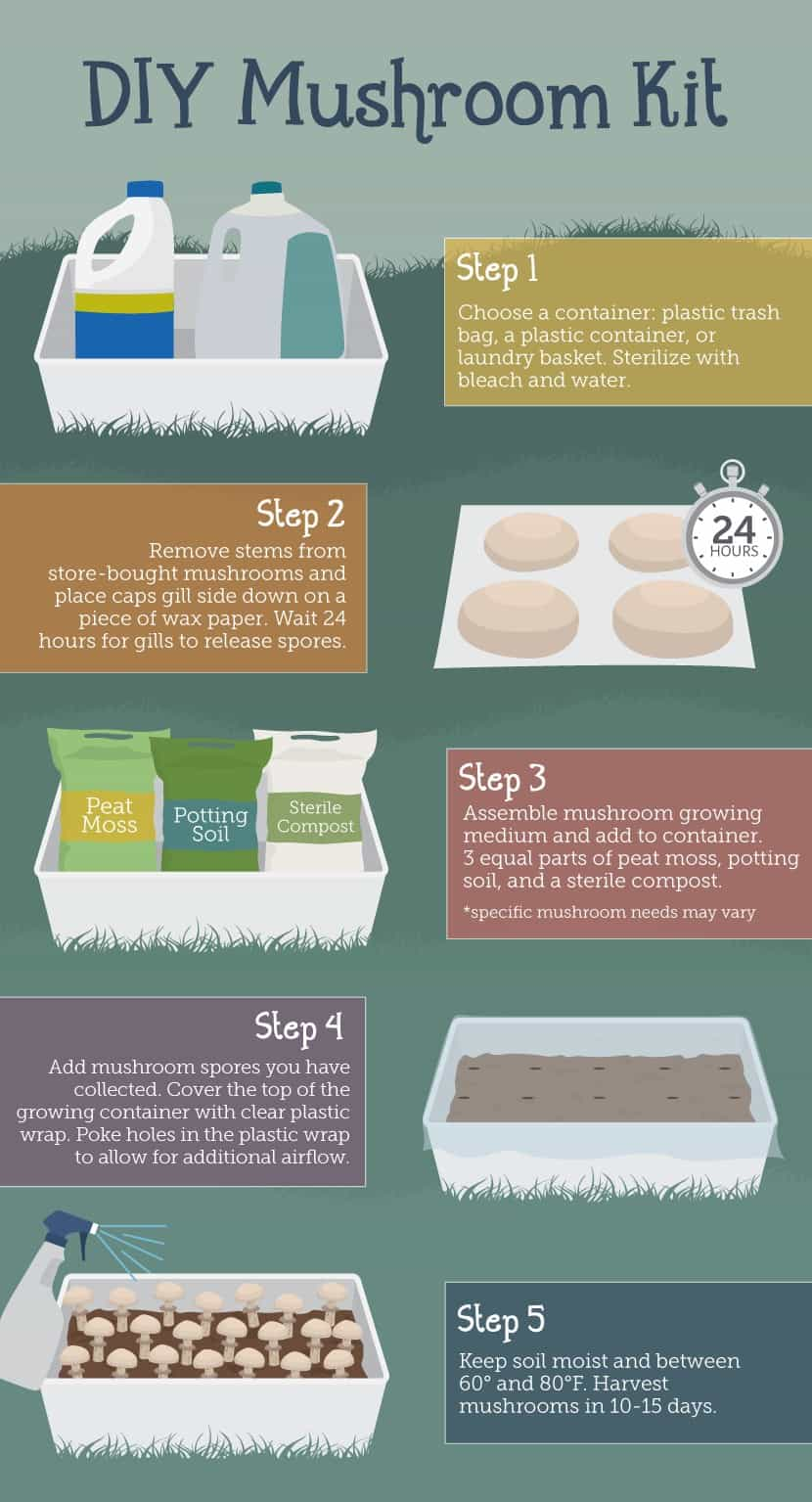 grow mushrooms in kit