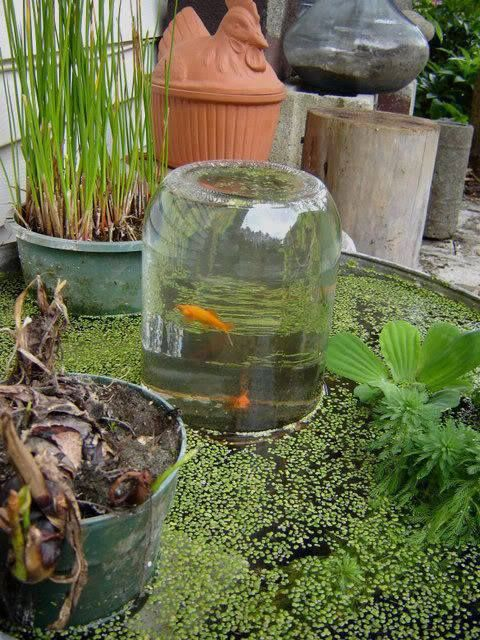 Fish observation tower an easy diy video tutorial for Garden pond insert
