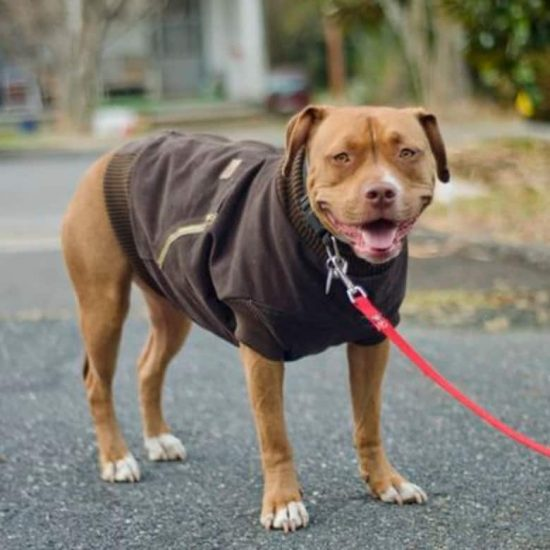DIY Dog Coat Pattern Quick And Easy Project Video Tutorial Best Dog Jacket Pattern