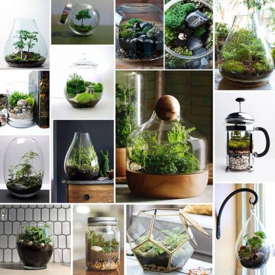 Terrarium Tips and Tricks