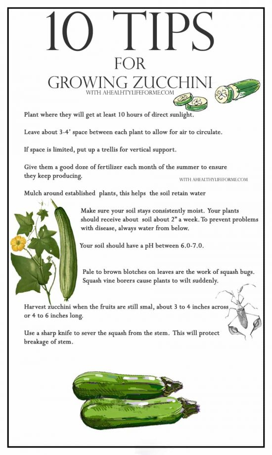 10-tips-for-growing-zucchini
