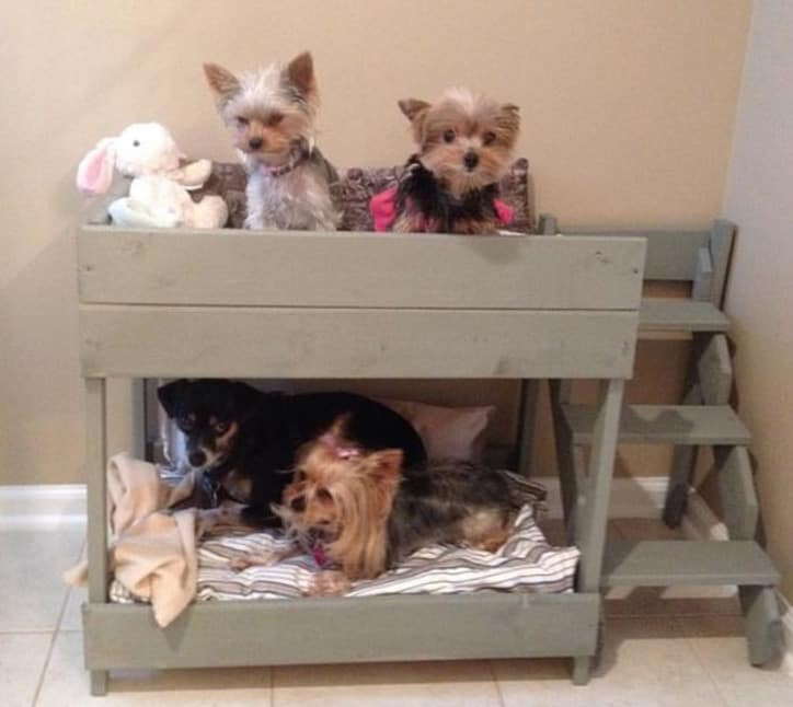 Puppy Bunk Beds