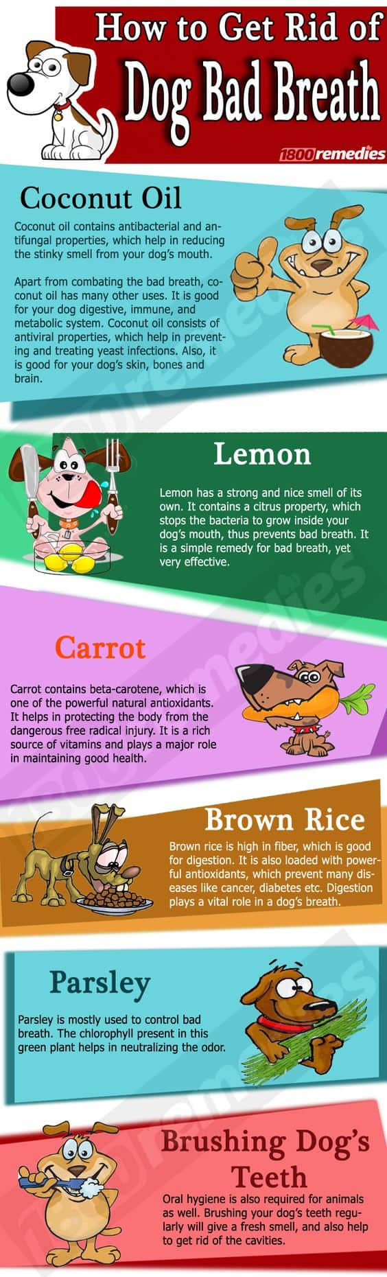 How To Get Rid Of Dog Breath Home Remedies