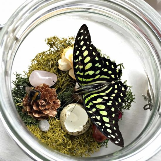Glass Butterfly Jars