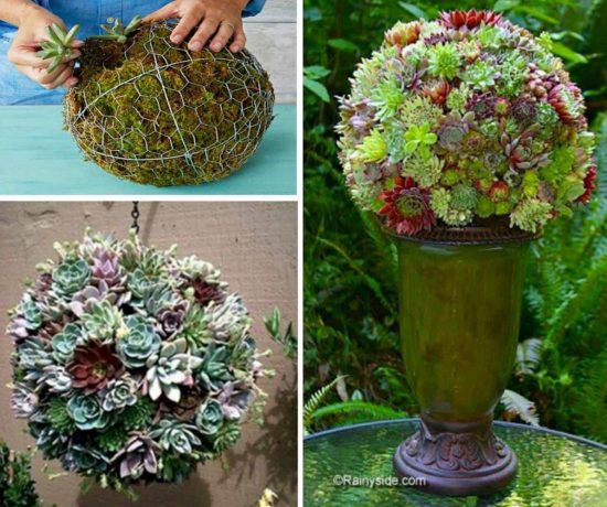 Succulent Sphere DIY The WHOot