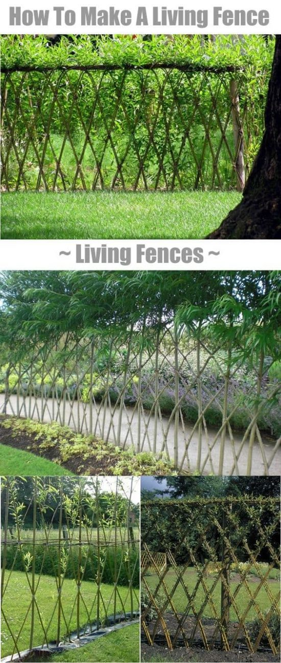 how-to-make-a-living-fence-for-your-garden