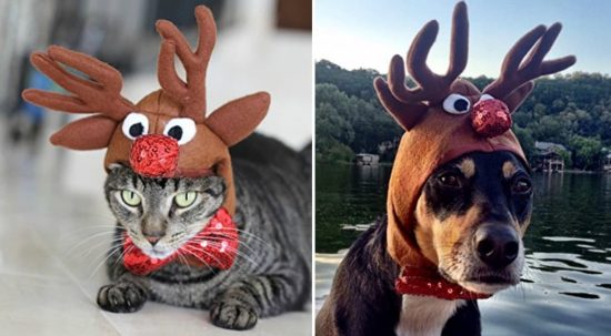 Cat and Dog Reindeer Hat