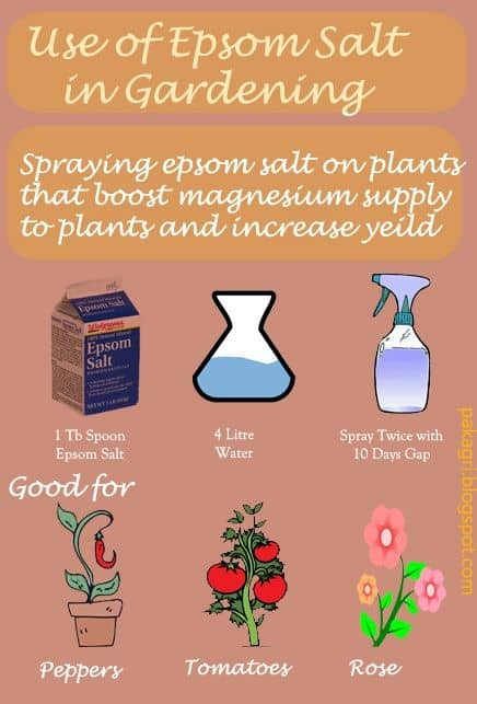 How To Use Epsom Salt In Your Garden