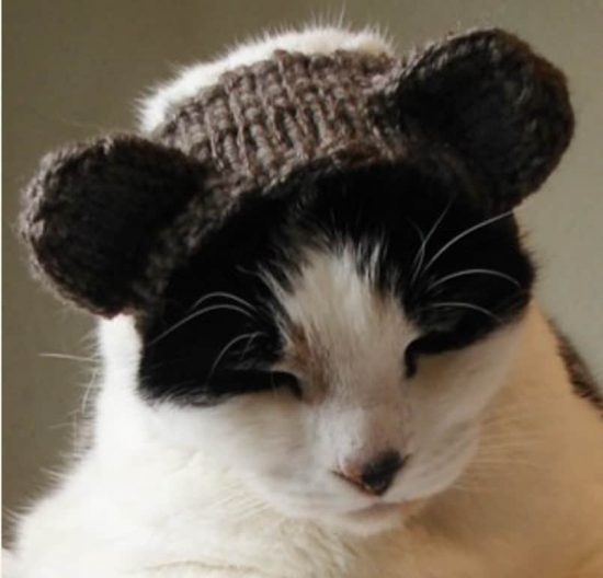 Furry Hat Cat Pattern