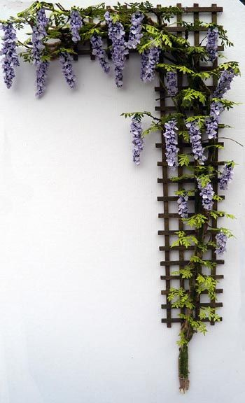 Grow Wisteria In A Pot