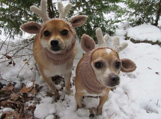 Knitting Pattern Hat With Dog Ears : Knitted Dog Hats with Ears Easy Free Patterns