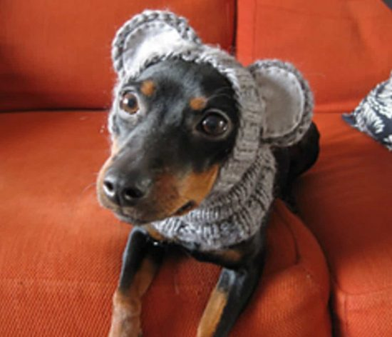 Knitting Pattern For Puppy Dogs : Knitted Dog Hats with Ears Easy Free Patterns