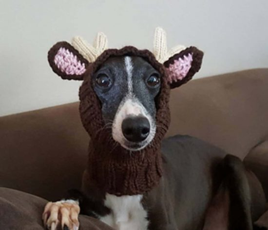 Knitting Pattern Hat Dog : Knitted Dog Hats with Ears Easy Free Patterns