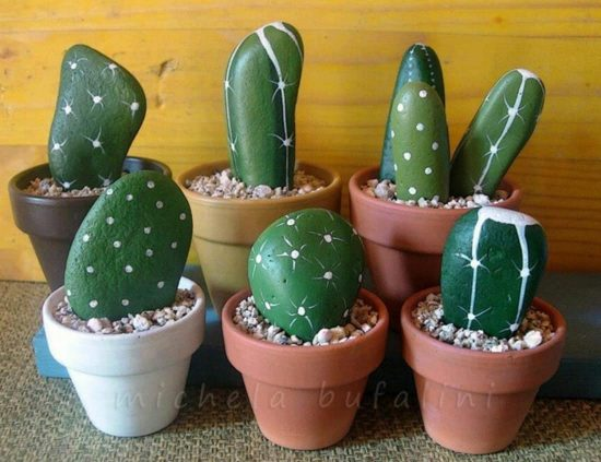 Image result for rock cactus
