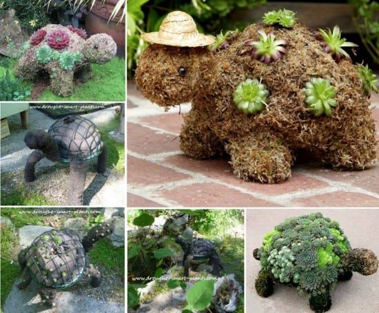 Succulent Turtle Planter Topiary Will Look Cute In Your Garden