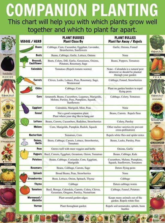 Companion Planting Chart  Resume Template Sample