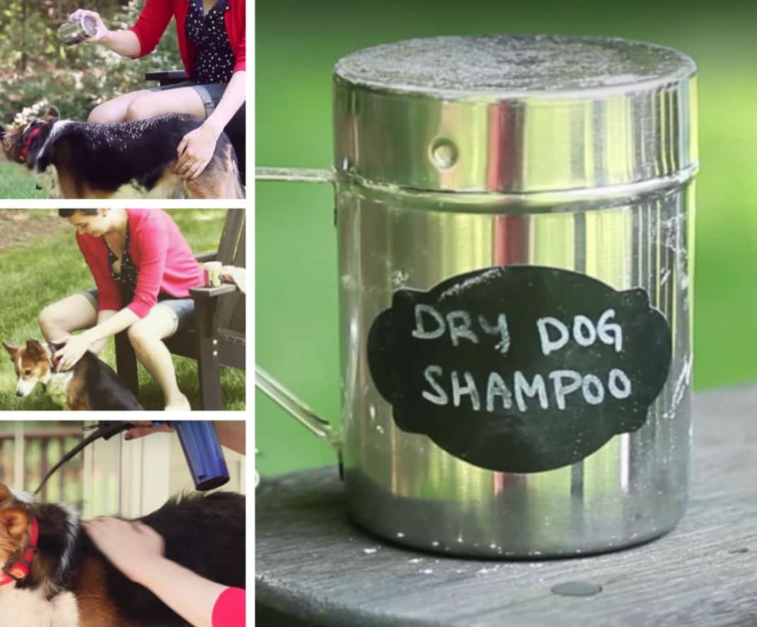 dry dog shampoo homemade recipe