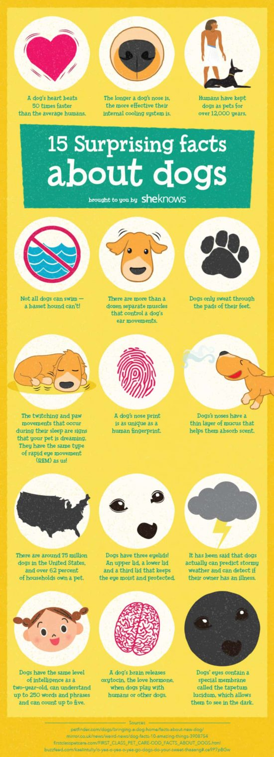 15 interesting and little-known facts about dogs info via She Knows