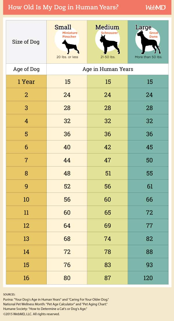 How Old Is My Dog In Human Years? Find Out Now infographic via Web MD