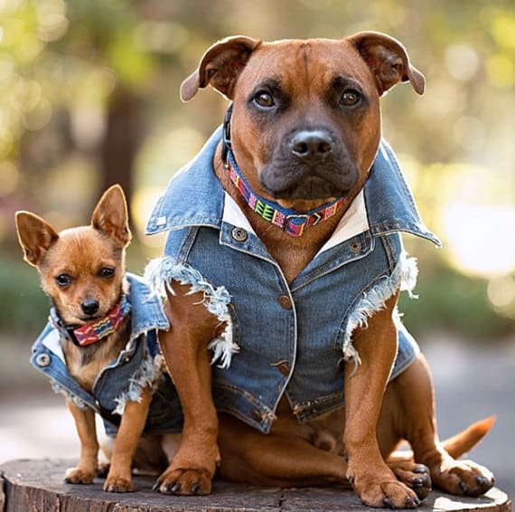Denim Vests For Dogs Cutest Collection Of Ideas
