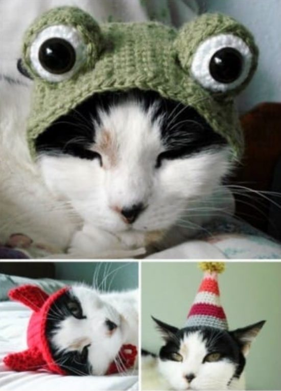 crochet cat hat pattern for cat