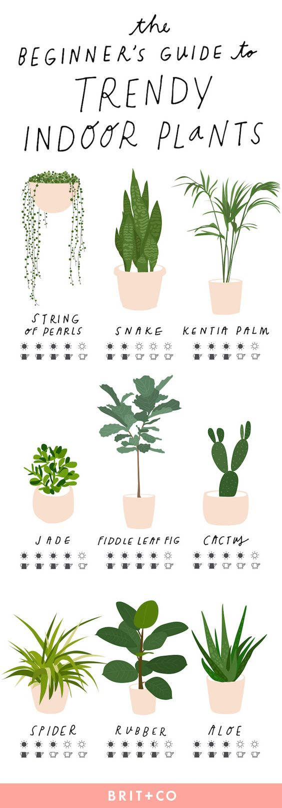 House plants guide pictures