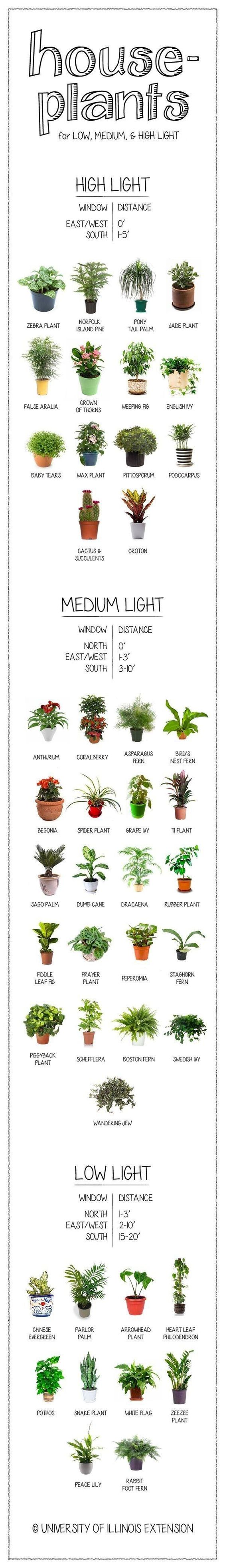 Beginners Guide To Growing Plants Indoors