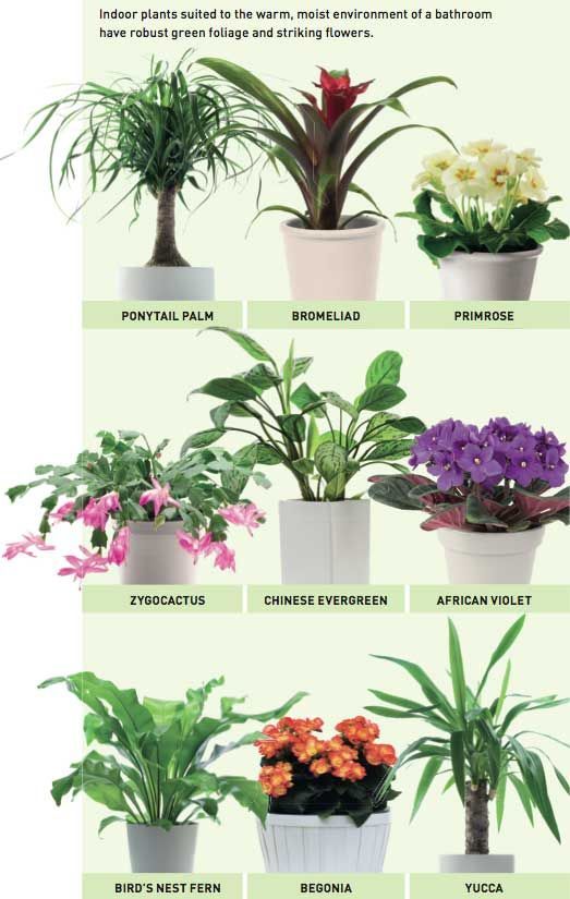 Beginners guide to houseplants ultimate guide video Best small office plants