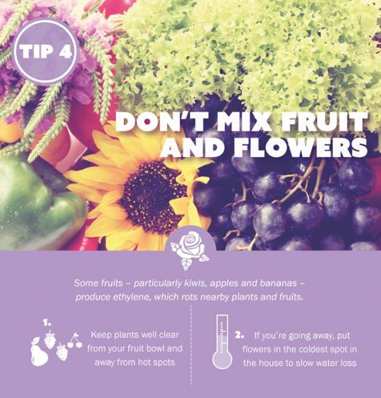 How To Keep Fresh Flowers Alive Video Instructions
