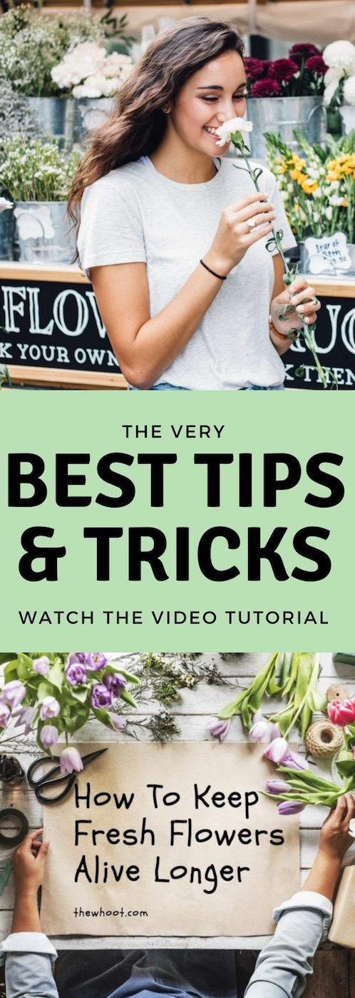 how to keep fresh flowers alive video instructions. Black Bedroom Furniture Sets. Home Design Ideas