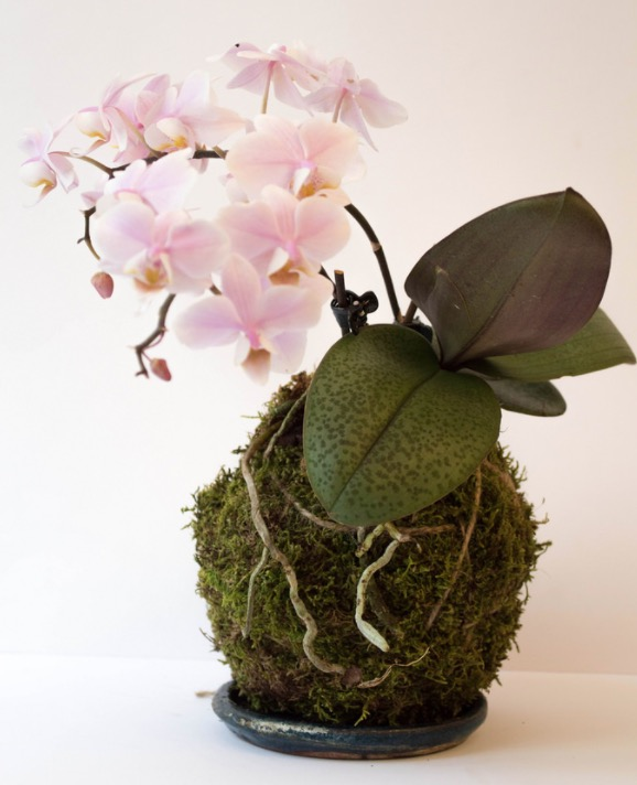 how to make a hanging kokedama bonsai garden in your home. Black Bedroom Furniture Sets. Home Design Ideas