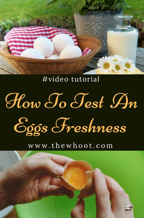 test egg freshness