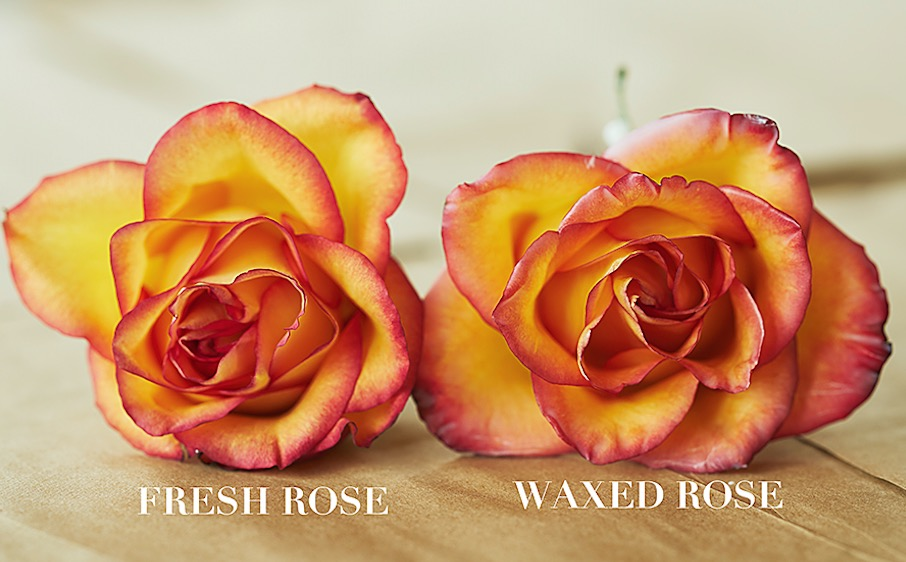 How To Preserve Roses With Wax Video Instructions