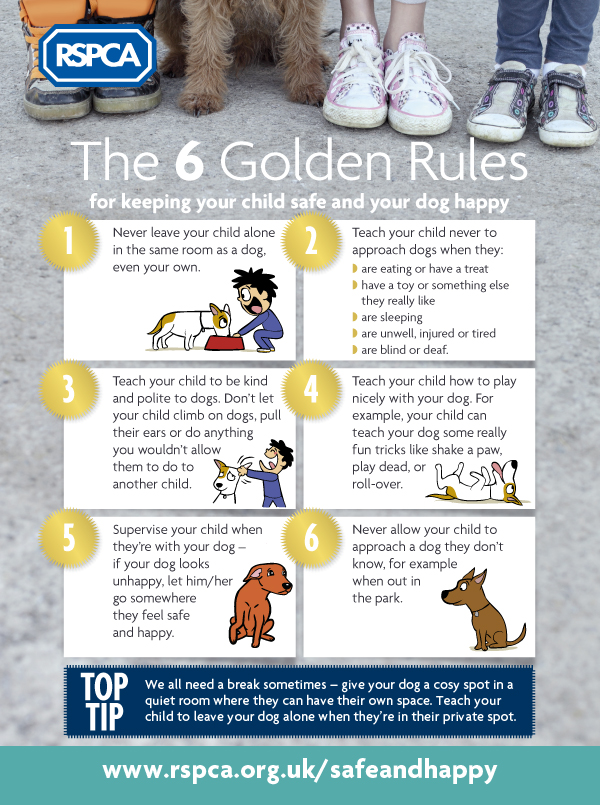 fireworks pet safety tips