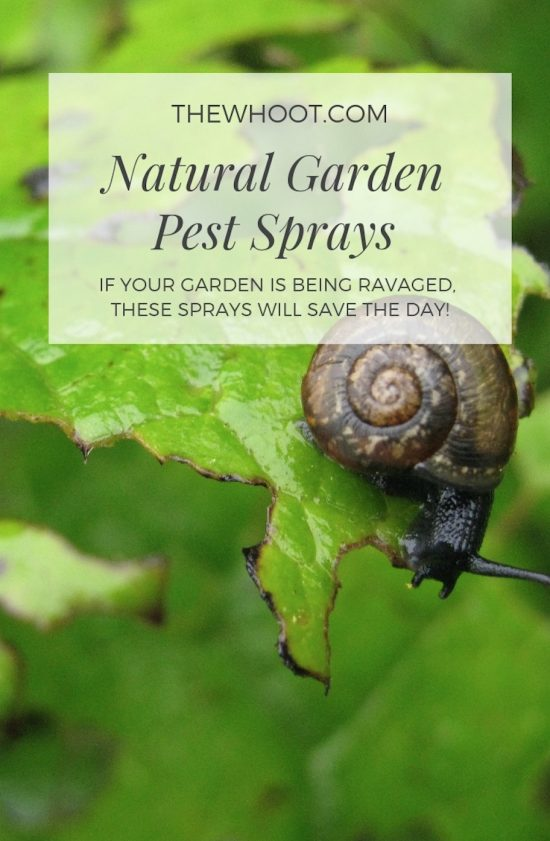 organic garden pest control spray