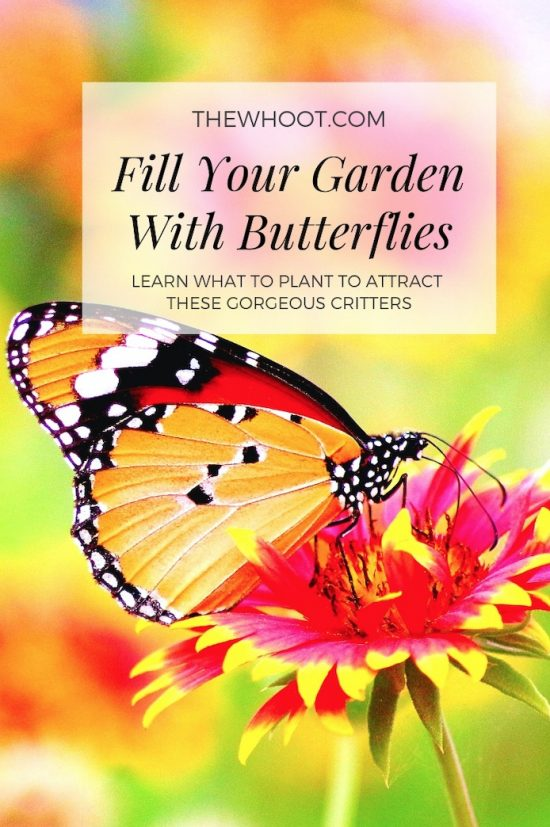 Fill Your Garden With Butterflies How-to-attract-butterflies-550x827