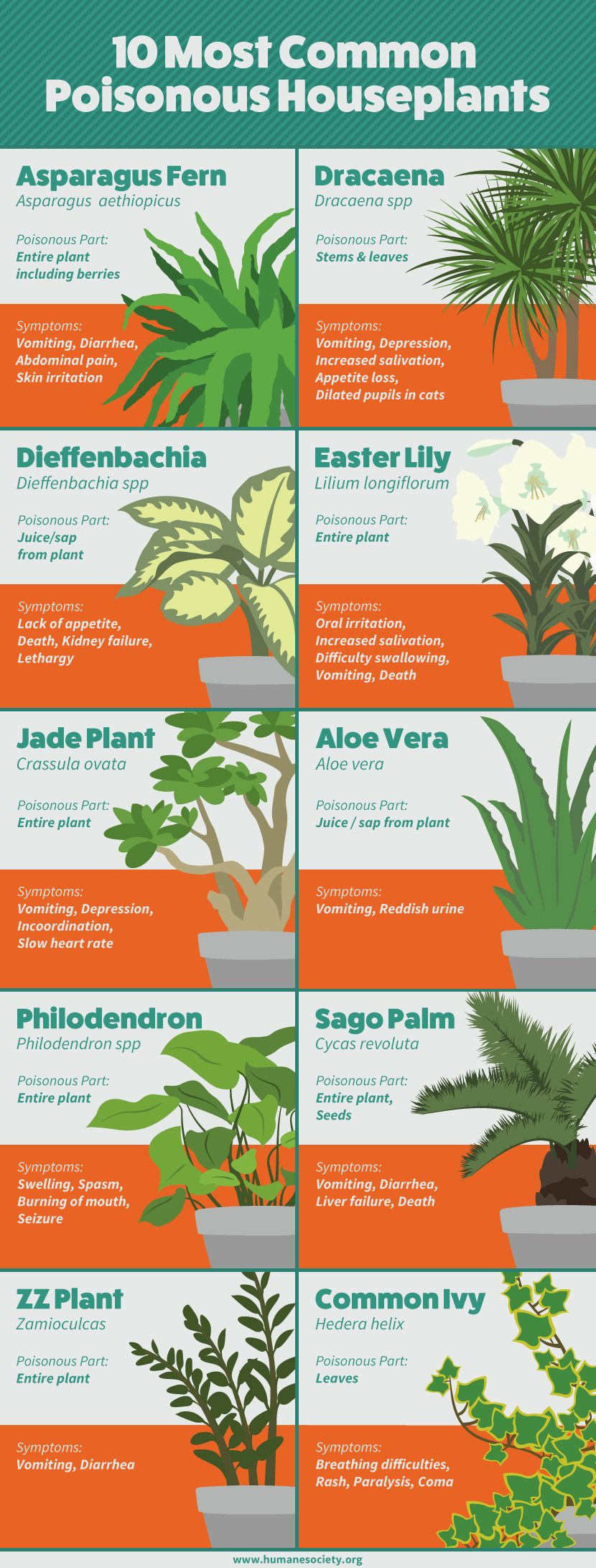 Pet Safe Housplants You Can Grow Worry Free The Whoot