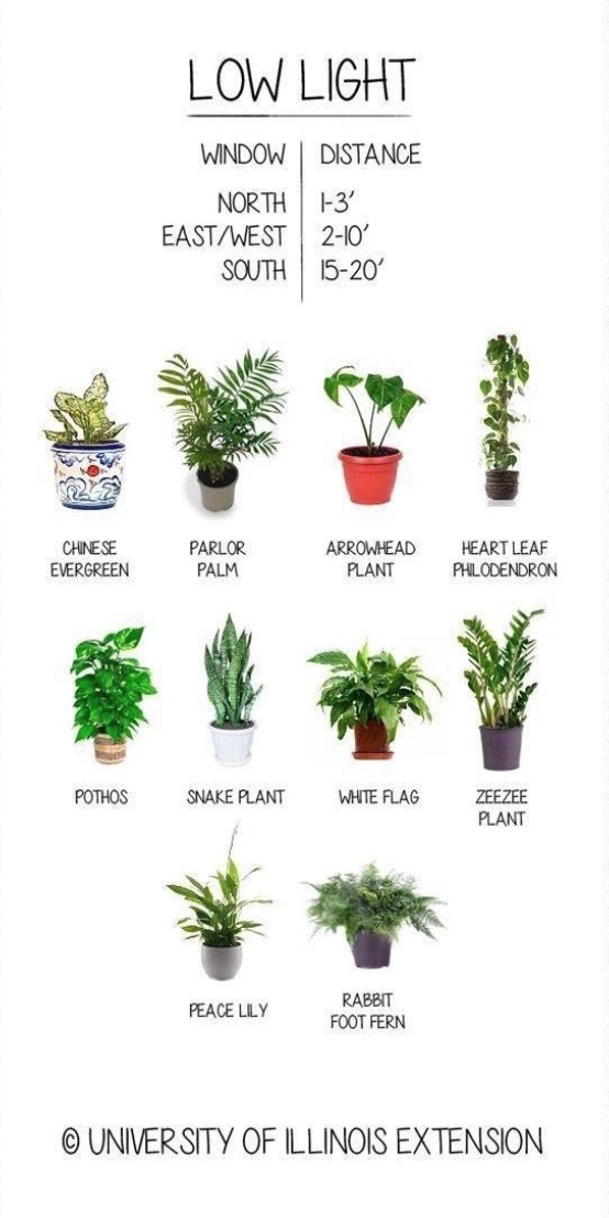 Low Light Loving Plants You Can Grow Anywhere Low-light-house-plants-1