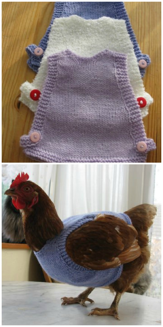 Free Knitted Chicken Sweater Pattern The Whoot
