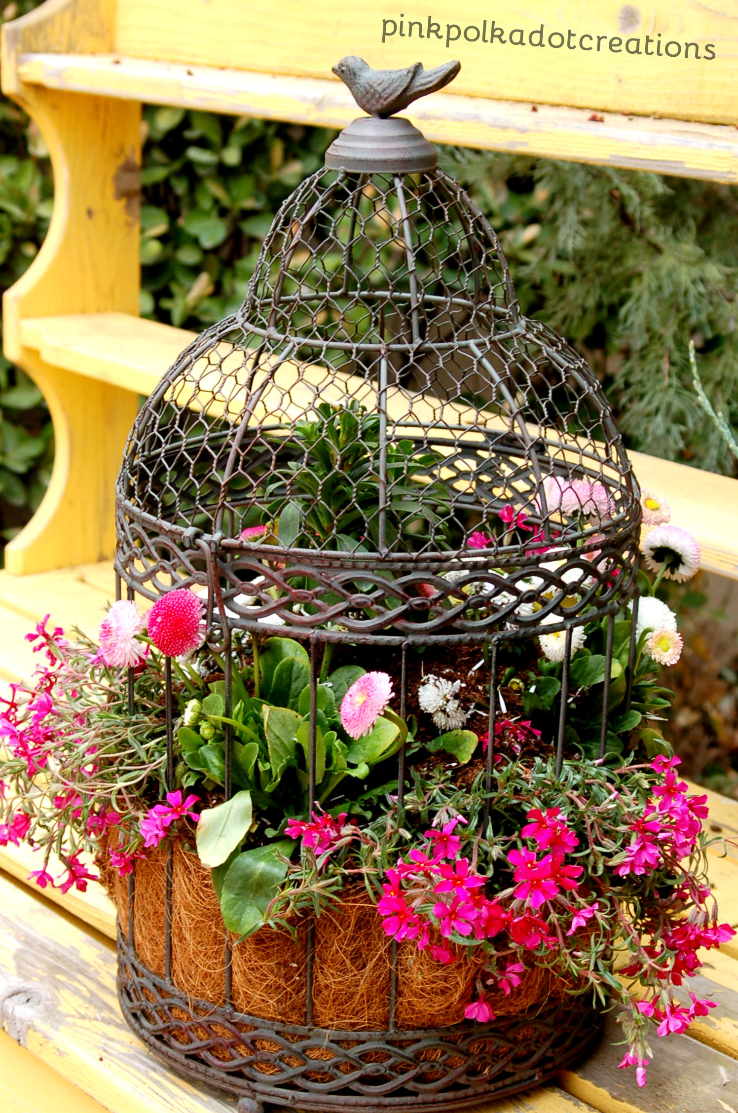 Birdcage Planter Ideas You Will Love The Whoot
