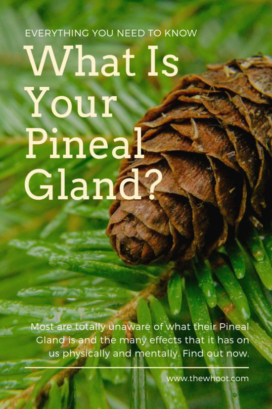 what is your pineal gland used for