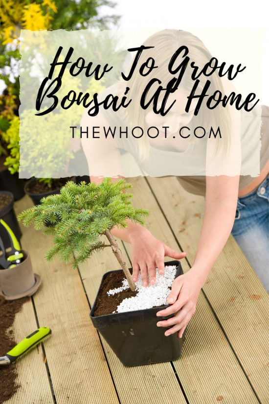 how to make a bonsai with any plant