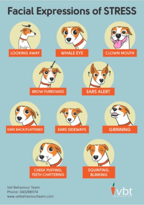 How To Tell If Your Dog Is Stressed via vet behavior team